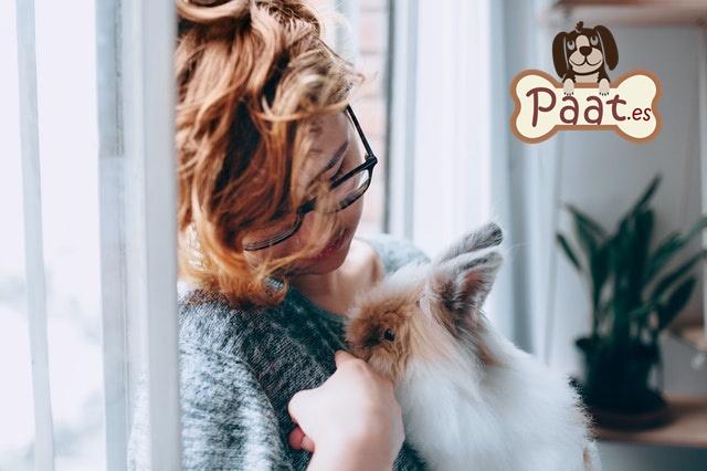 Terapia con animales. Terapia con conejos