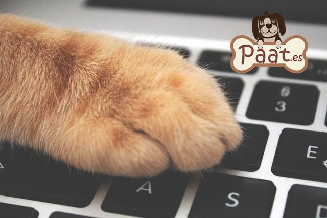 cursos online terapia con animales
