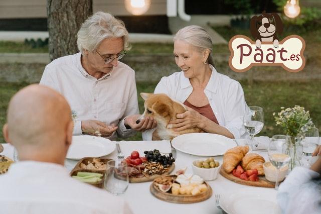 geriatria y terapia con animales