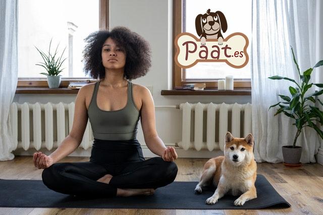 Terapia con animales. Perros de terapia