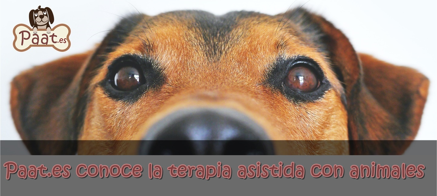 Paat.es Cursos de terapia Asistida con animales TAA